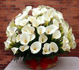 Alcatraces Y Cala Lilis Flores Glamorosas